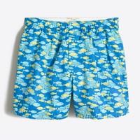 Tropical fish boxers